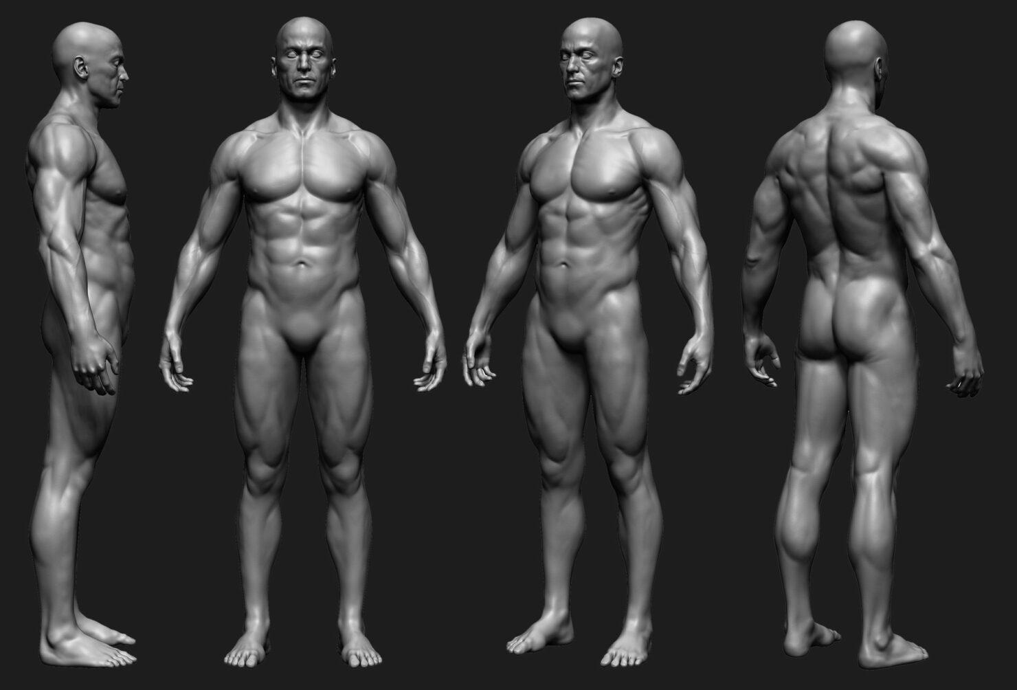 anatomy_8