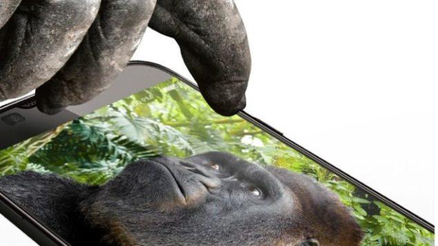 Gorilla-images-glass