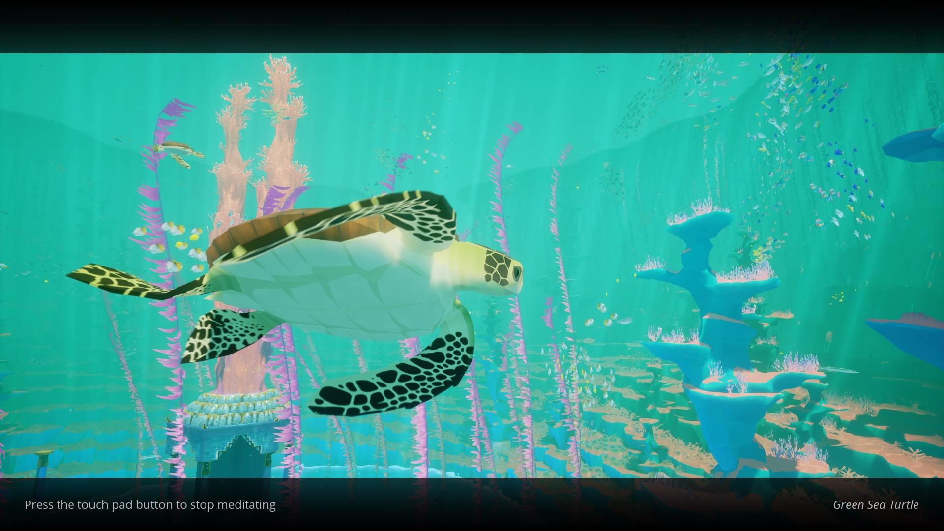 Abzu Turtle