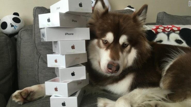 Billionaire Son's Lucky Dog Gets a Total of 8 iPhone 7 Handsets