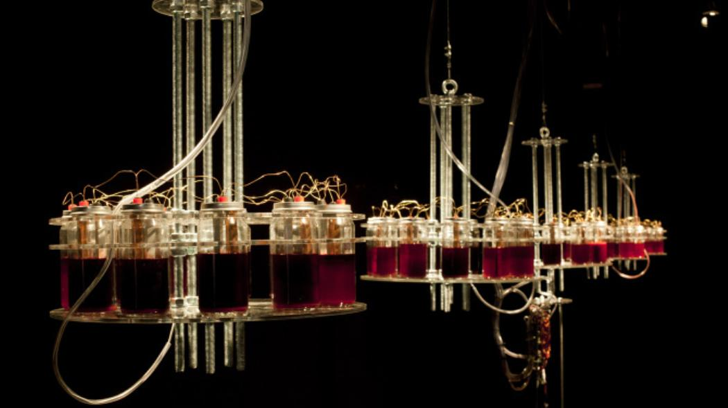 Vtol, the Russian artist, creates another bizarre installation of sound run by his own blood!