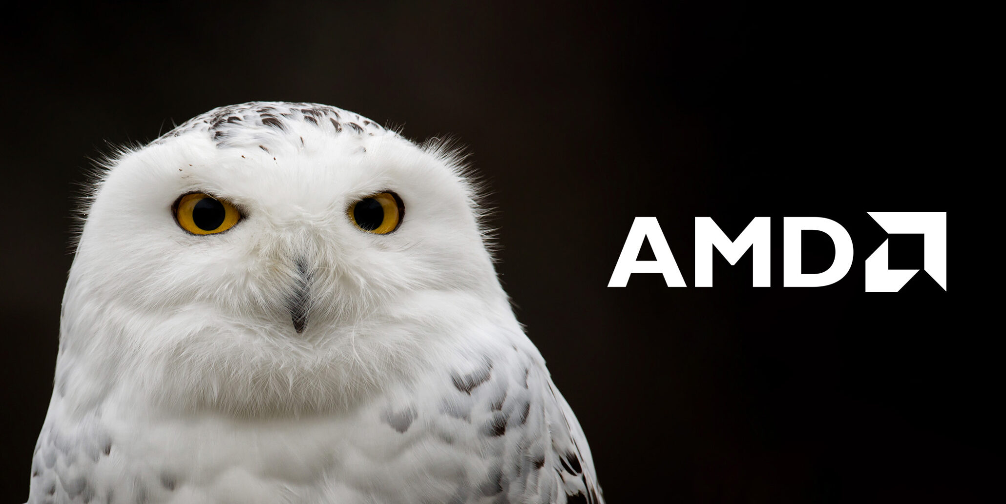 AMD's Snowy Owl Will Be Rolled Out As EPYC 3000 Series Lineup