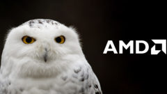 snowy-owl-feature-amd