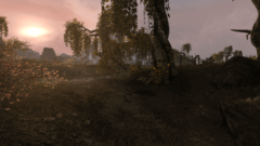 skywind_forest
