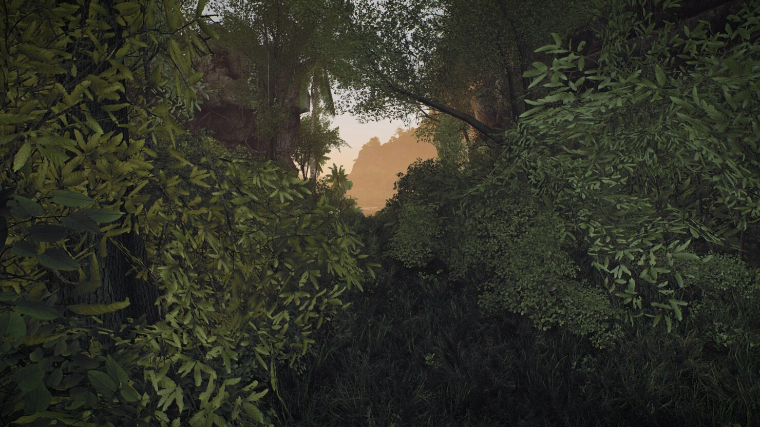 island-forest-morning_49959222736_o