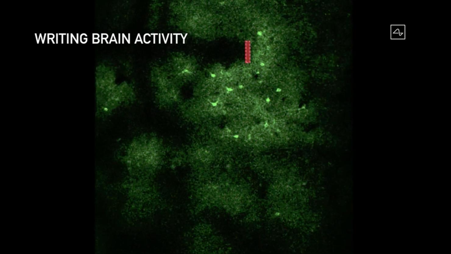 neuron-firing-neuralink