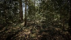 unreal-engine-5-forest-map